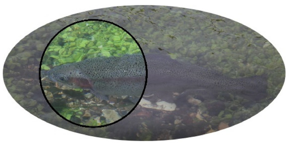 Polarised Sunglasses view of trout